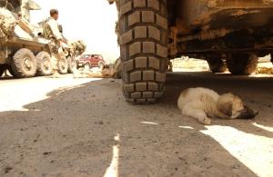 Tikrit Puppy